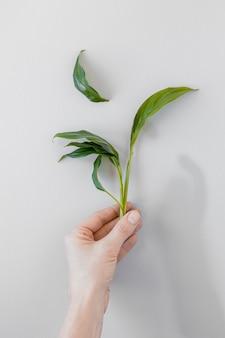Pessoa de vista superior, segurando uma planta em fundo branco