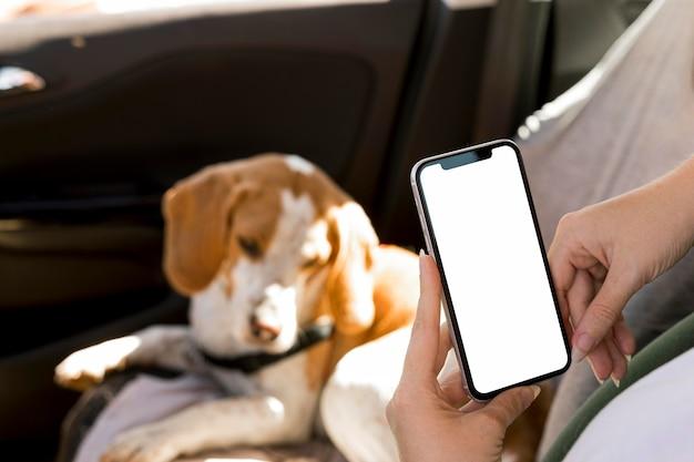 Pessoa segurando um telefone celular e um cachorro desfocado no fundo