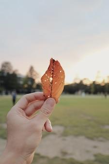 Pessoa, segurando uma folha de ouro danificada com pequenos furos nele
