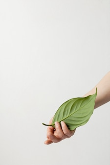 Pessoa segurando uma folha verde