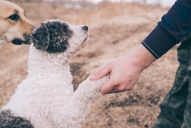Pessoa, tocando, com, cachorros, exterior