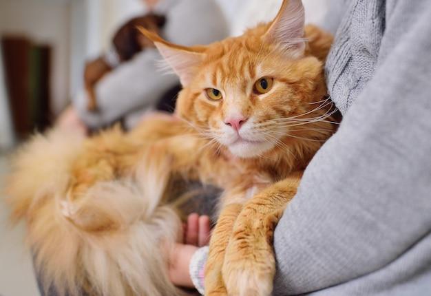 Pessoas com seus animais de estimação estão esperando por um exame médico na clínica veterinária. saúde animal