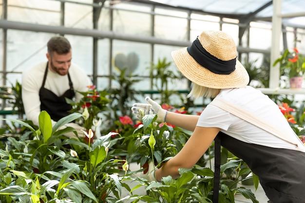 Pessoas de tiro médio cuidando de plantas