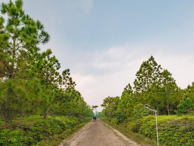 Pessoas desconhecidas caminhando até o topo do parque nacional da montanha phu kradueng, na cidade de loei, tailândia.