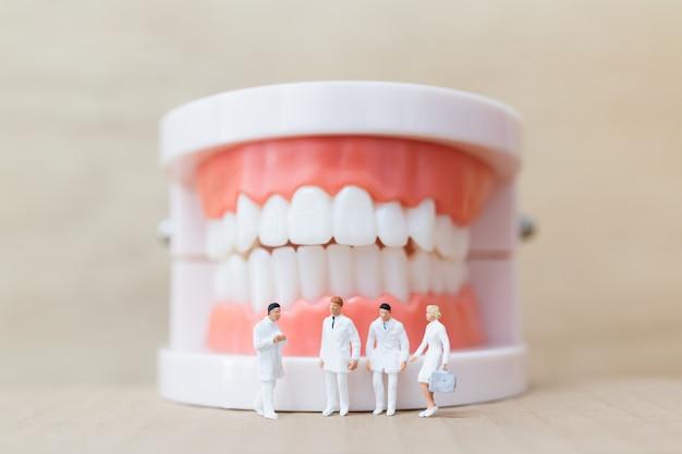 Pessoas em miniatura: dentista e enfermeira observando e discutindo sobre dentes humanos com gengivas e esmalte