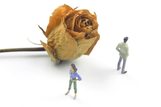 Pessoas em miniatura em um relacionamento com uma grande rosa seca em um fundo branco.