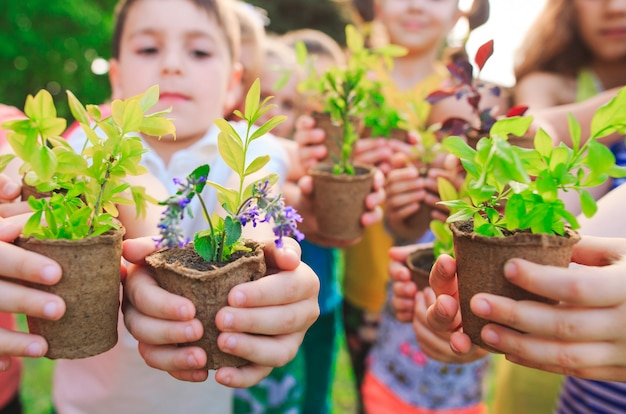 Pessoas mãos colocando planta nutrir ambiental