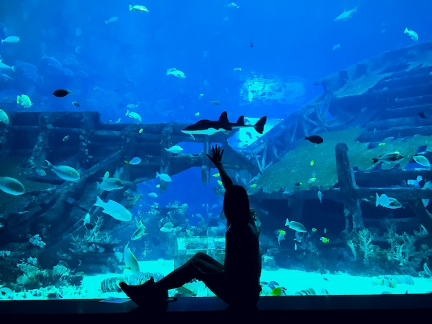 Pessoas observando peixes no aquário