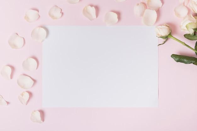 Pétalas brancas de rosa em papel em branco contra o pano de fundo rosa