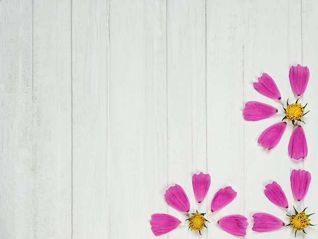 Pétalas cor-de-rosa de uma flor bonita