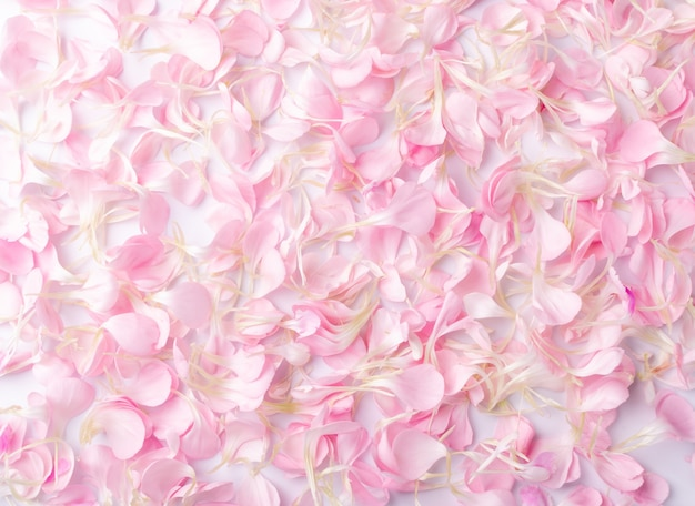 Pétalas de cravo rosa, vista superior do fundo da textura dos flocos da flor.