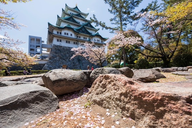 Pétalas de flor de cerejeira com o castelo de nagoya