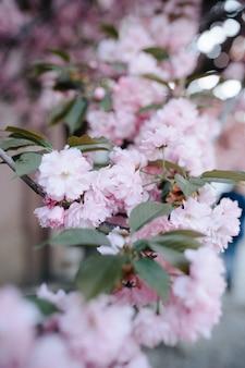 Pétalas de flor de cerejeira rosa no chão