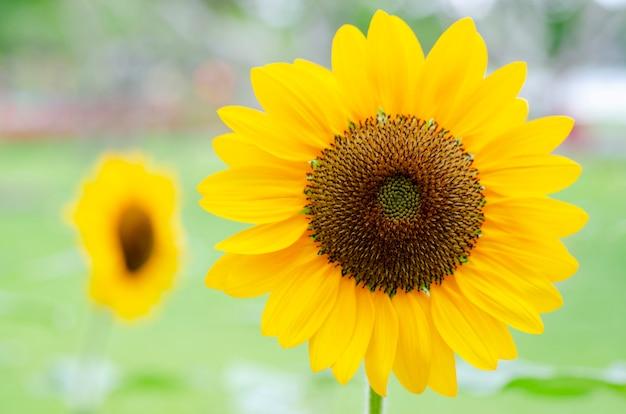 Pétalas de flores amarelas com um padrão de fundo desfocado.