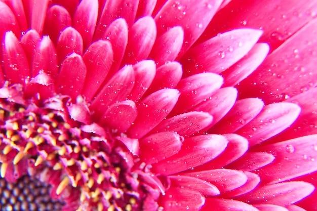 Pétalas de flores cor de rosa, macro em flor, fundo abstrato bonito.
