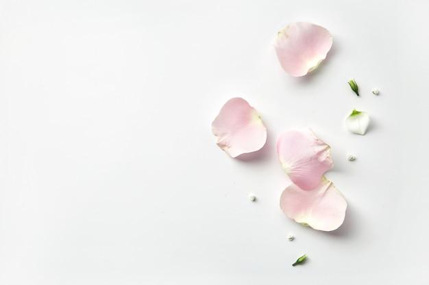 Pétalas de flores rosa em fundo branco, com espaço de cópia. vista superior de pétalas suaves