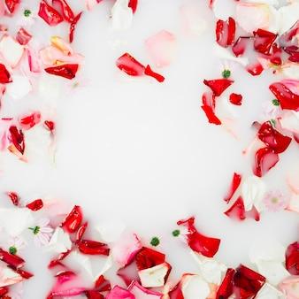 Pétalas de flores vermelhas e brancas flutuando no leite