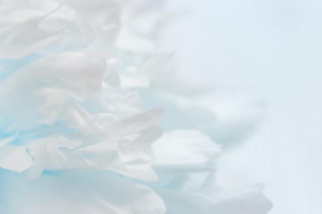 Pétalas de peônia turva, abstrato azul, cores pastel