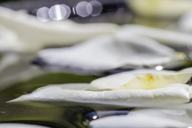 Pétalas de rosa branca na aromaterapia da água e no conceito de spa