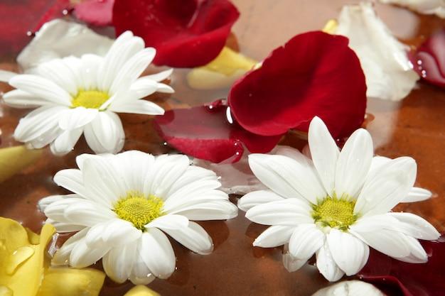 Pétalas de rosa e flor da margarida no spa de água