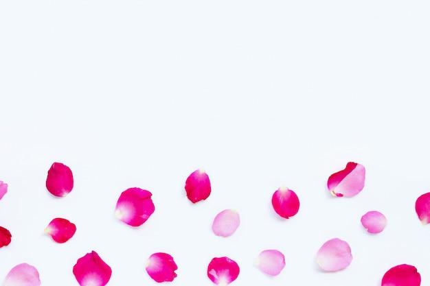 Pétalas de rosa isoladas no branco.