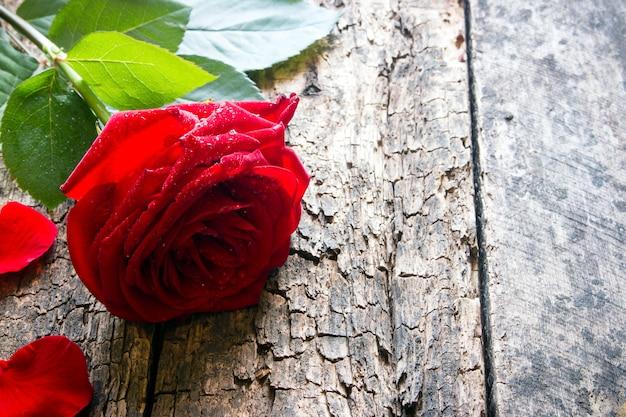 Pétalas de uma rosa vermelha fechem na madeira com gotas de água nas pétalas