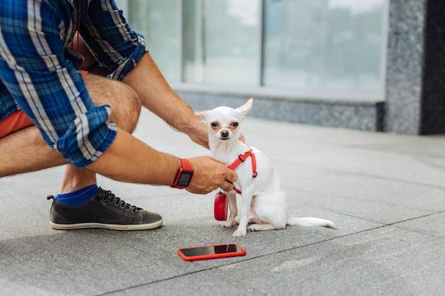 Petting dog. homem carinhoso e elegante, vestindo uma camisa quadrada azul, acariciando seu cachorrinho branco perto do centro de negócios