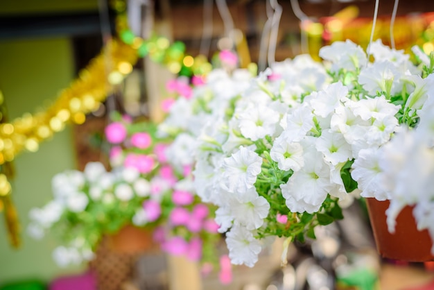 Petunia branca bonita no pote de plástico vermelho no mercado petunias na tailândia