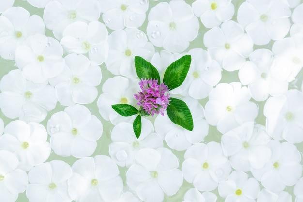 Phlox paniculata na água, textura e fundo de flores phlox paniculata