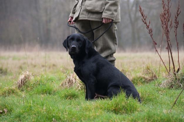 Pick-up labrador cães ao ar livre domesticado campo