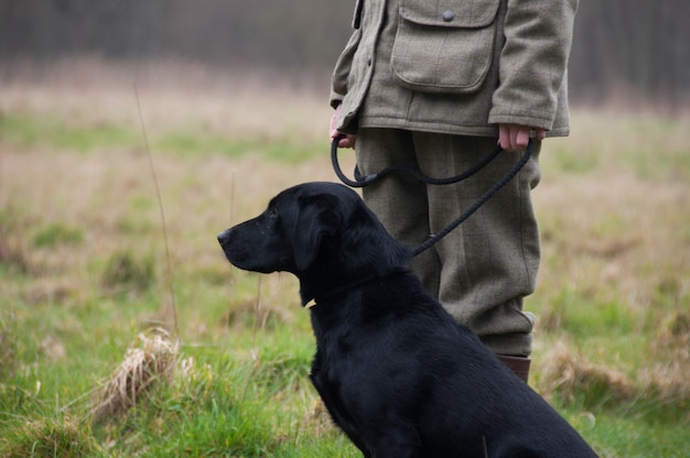 Picker-up caça batedor escolher ao ar livre labradors