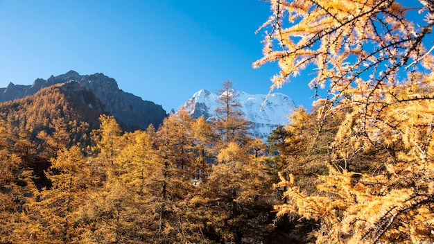Pico da neve da vista bonita com as folhas de outono na reserva natural yading, sichuan, china.