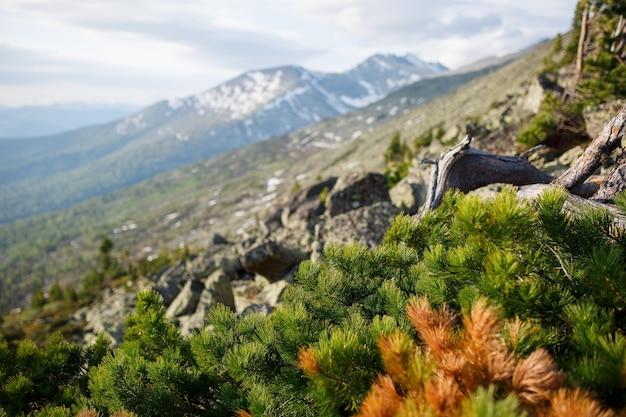 Pico de montanha de águias, coberto de florestas de coníferas e uma clareira.
