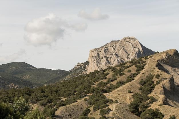 Pico de uma montanha e vegetação