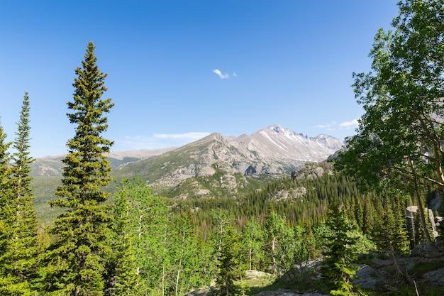 Picos de pinheiros longos contra montanha rochosa