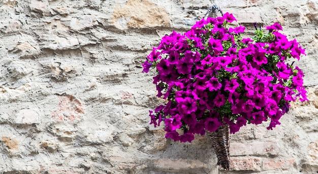 Pienza, região da toscana, itália. parede velha com flores