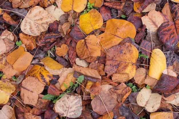 Pile multi colored outono folhas no solo.