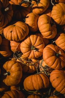 Pilha de abóboras laranja