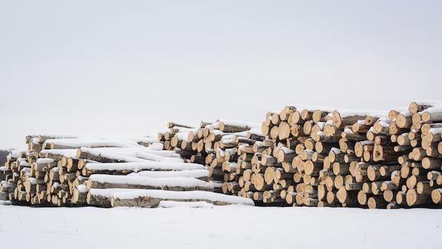 Pilha de álamos desmatados no inverno. troncos de árvores à venda