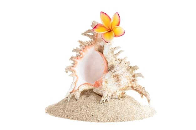 Pilha de areia com grandes conchas e flores de frangipani, isolada no fundo branco