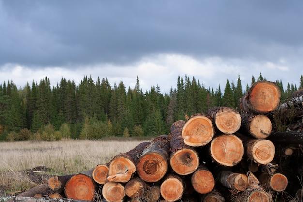 Pilha de árvores derrubadas no primeiro plano e floresta conífera verde sob o céu nublado sombrio.