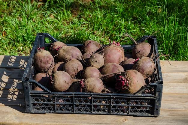 Pilha de beterraba fresca no mercado de agricultores ao ar livre