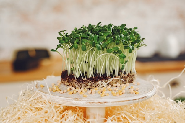 Pilha de beterraba micro verduras na mesa