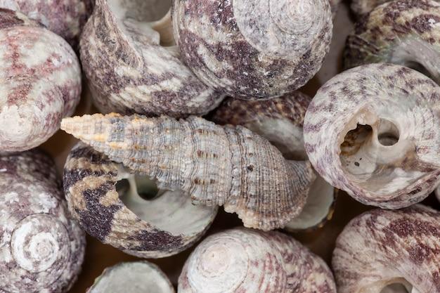 Pilha de cenário de pequenas conchas.