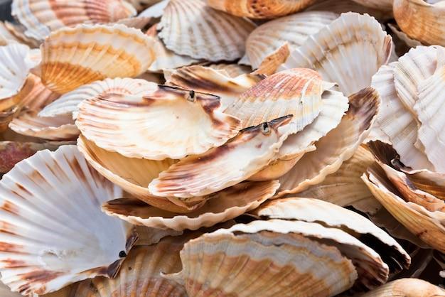 Pilha de conchas de vieira como textura de fundo