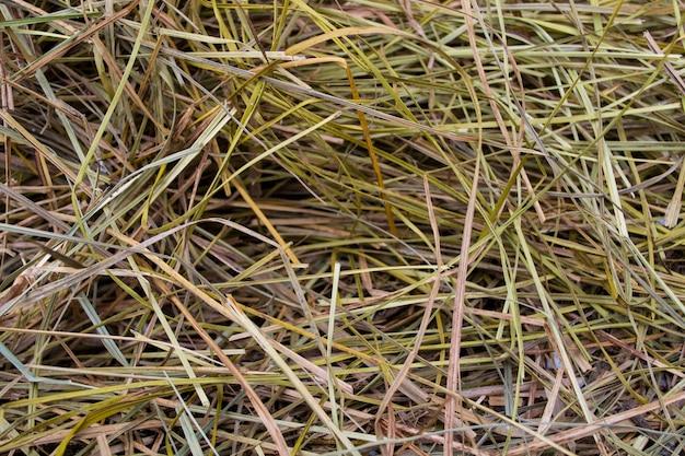 Pilha de feno de grama para ração animal