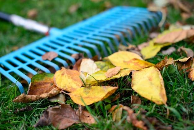 Pilha de folhas caídas com ancinho em grama verde