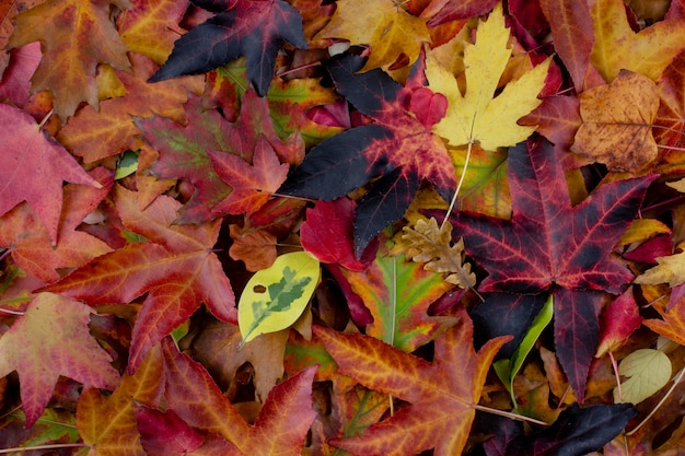 Pilha de folhas de outono multi coloridas na terra. fundos do outono.