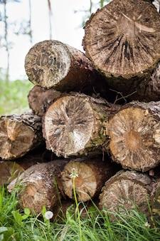 Pilha de fundo de textura de madeira pilha de madeira corta velhas árvores na grama.