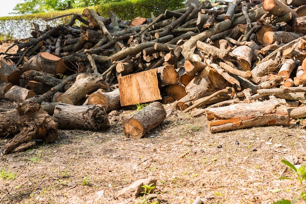 Pilha de galho de árvore